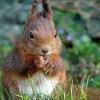 Osterhörnchen