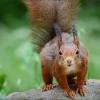 Blickkontakt mit dem Eichhörnchen