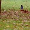 Rabe und Eichhörnchen