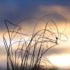 Gräser an einem Dezembermorgen