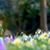 Frühlingwiese