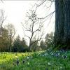 Frühlingswiese im März