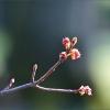 Baumzweig im April