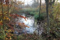 Herbstimpressio