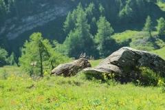 Bergfink und Steinschmetzter