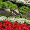Nilgänse im Blumenbeet