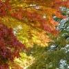 Farbnuancen im November