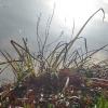 Gräser und Blätter