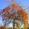 Baum voller Beeren