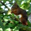 Das andere Eichhörnchen bei uns im Baum