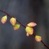 Kleine Blätter und Dornen