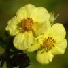 Kleine gelbe Blüten