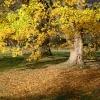 Herbstbaum und Laub