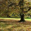 Herbstblätter fallen vom Baum