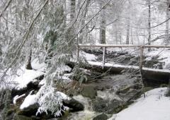 Espere: Winterwald