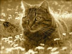 Eneyo:  Katze