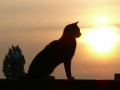 Eneyo:  Katzenprofil