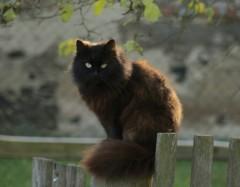 Christine: Katze