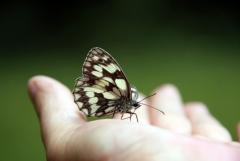 Felfrie: Schmetterling auf der Hand