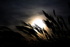 Felfrie: Sonnenuntergang am See