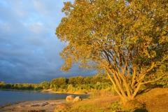 Violette: Landschaft am See
