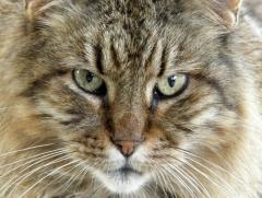 Felfrie: Katzenportrait