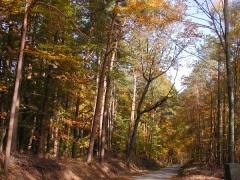 Omama:  Waldweg im Oktober