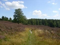 Corinna: Weg durch die Heide