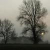Mondi: Bäume