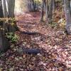 Herbst15 9