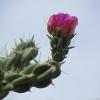 Blüte Schutz