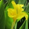 Blüte Insekt