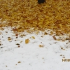 Herbst15 6