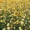 Herbst15 5