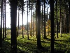 Graziella: Herbstwald