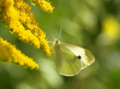 Christine: Schmetterling