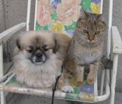 Rhonda: Hund und Katze