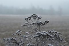 Violette: Nebel im Dezember