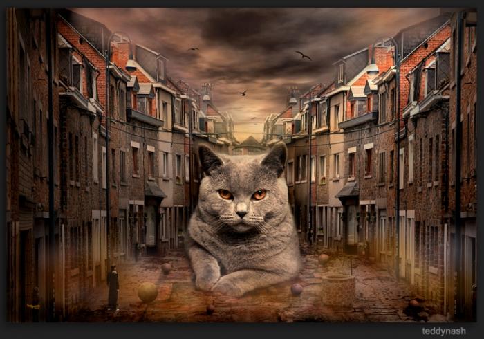 Teddynash: Katze