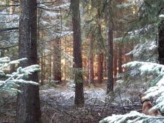 Quassel:  Wald im Dezember