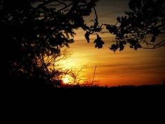 Rosenkohl: Sonnenuntergang