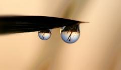 Sylke: Zwei Regentropfen