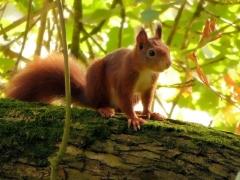 Bussi: Eichhörnchen