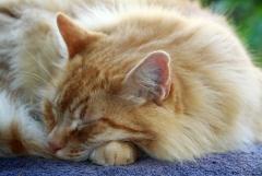 Felfrie: Schlafende Katze