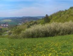 Andy: Landschaft im Frühling