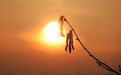 Sylke: Zweig in der Frühlingssonne
