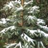Schnee im Allgaeu