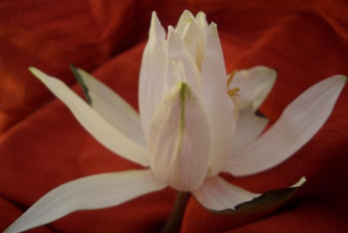 Rückzug nach der Blütenacht beim ersten Tageslicht