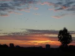 Quassel: Morgenhimmel