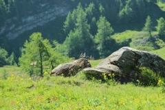 Jomo: Berglandschaft